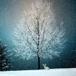 大人におすすめのクリスマスの絵本と本