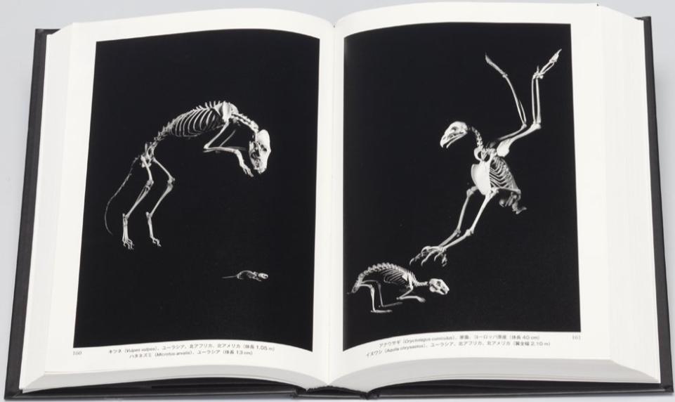 骨から見る生物の進化