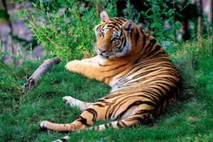 【動物雑学本】知らないなんてもったいない! 動物園に行くのが10倍楽しくなる10冊(幼児〜小学生〜大人におすすめ)
