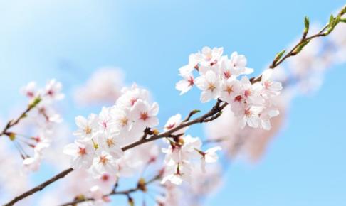 中学受験後の春休みは絶対に「英語」をしなければいけない3つの理由と対策
